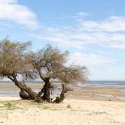 Cap Ferret, Bassin d'Arcachon